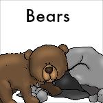 Bear Theme