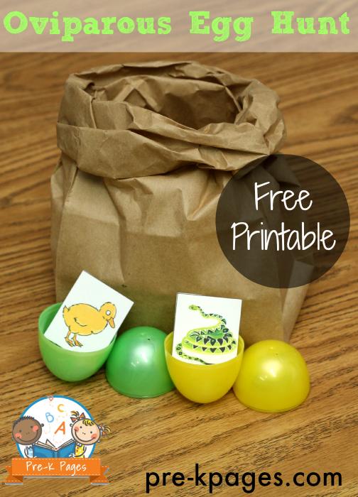 Hunting for Oviparous Eggs in #preschool and #kindergarten