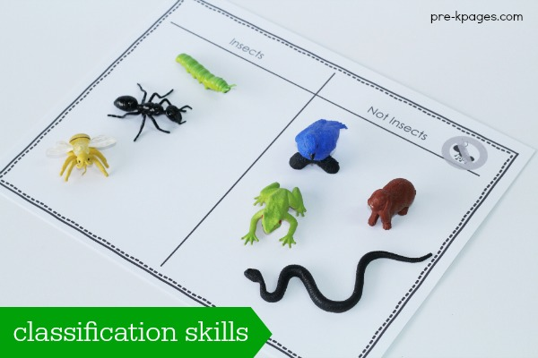 Printable Insect Classification Activity