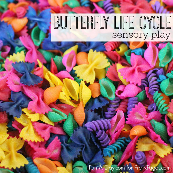 preschool butterfly life cycle sensory play