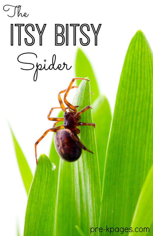 Itsy Bitsy Spider Preschool Activities