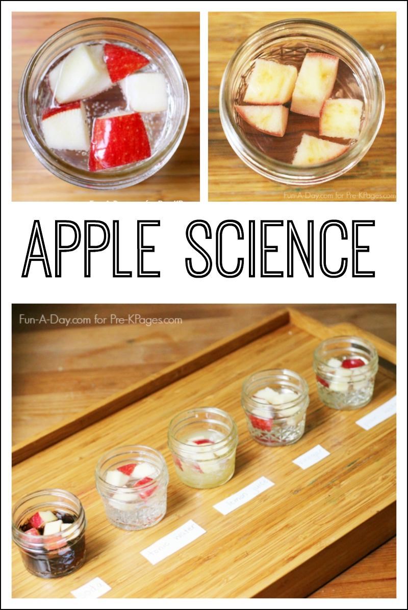 science apple experiment preschool pre kindergarten apples easy simple craft disclosure included links below amazon