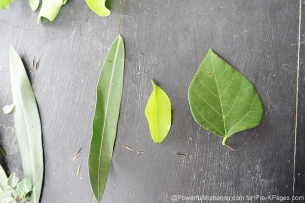 leaves sort size math activity