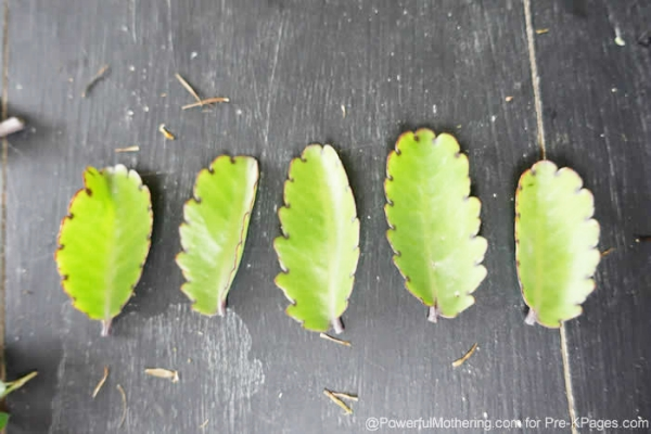counting leaves math activity