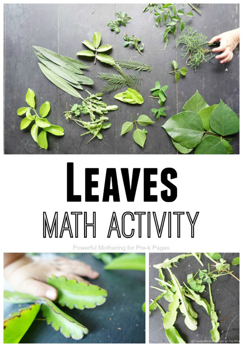 leaves nature math activity for preschool. Black Bedroom Furniture Sets. Home Design Ideas