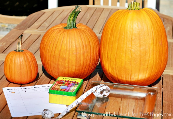 Pumpkin measurement supplies