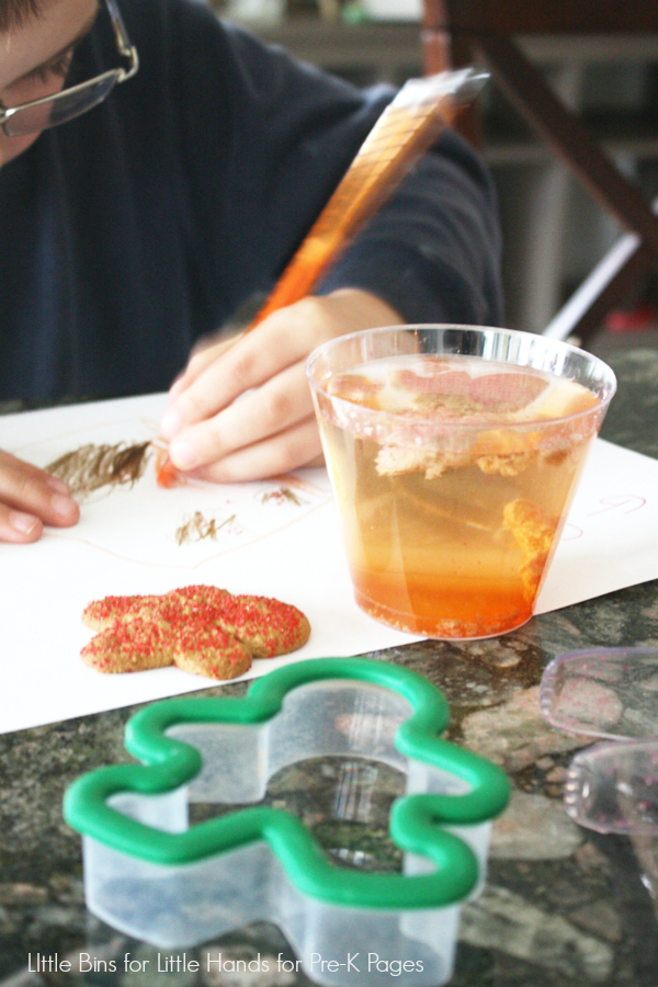Dissolving Gingerbread man Science Activity Coloring Observations