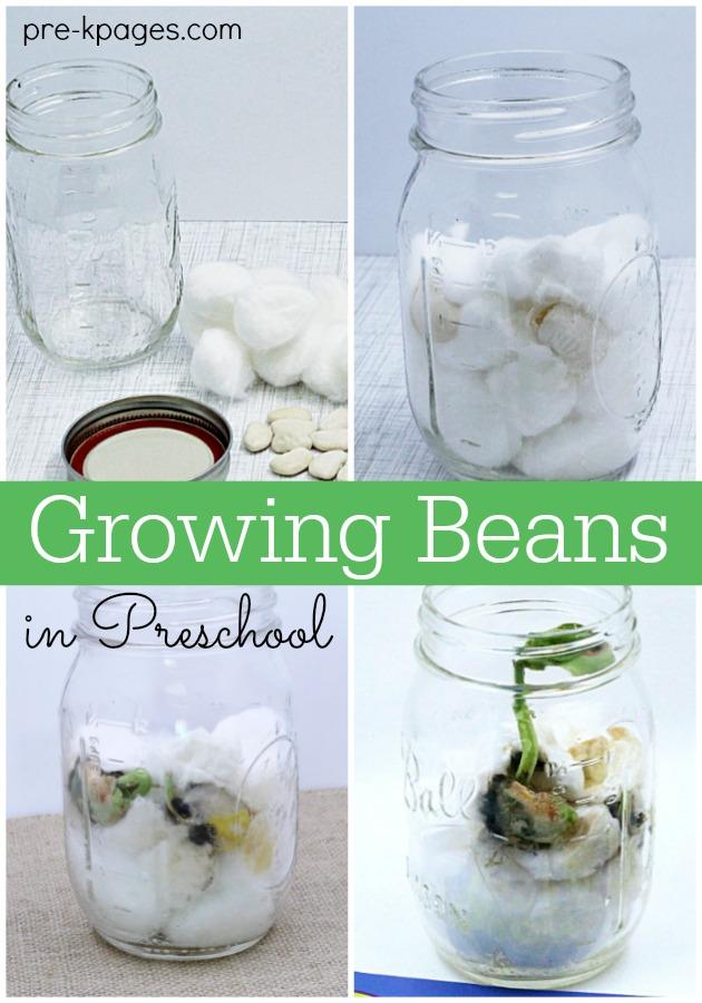 Grow Beans with Preschoolers