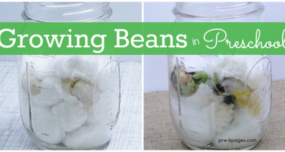 Planting and Growing a Beanstalk in Preschool