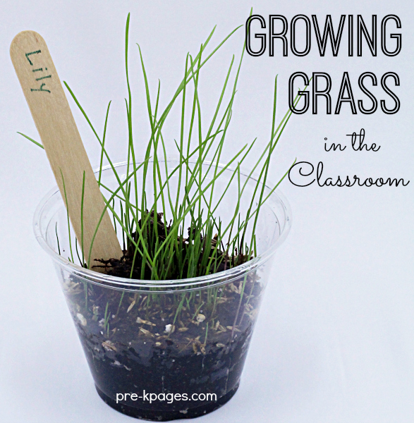 Growing Grass with Kids in the Classroom