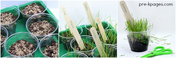 How to Grow Grass in the Classroom