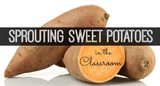 Science for Kids: Sprouting Sweet Potatoes