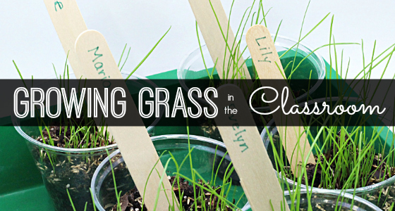 Planting and Growing Grass in Preschool