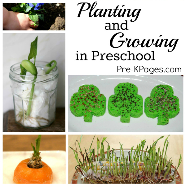 16 Foods That Will Re Grow From Kitchen Scraps: Science For Kids: Planting And Growing In Preschool