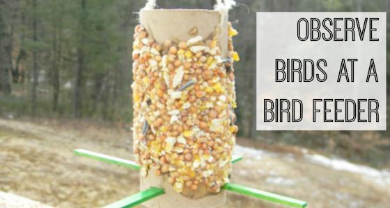 Make A Bird Feeder And Observe Birds