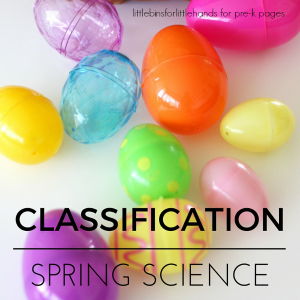 spring classification activity