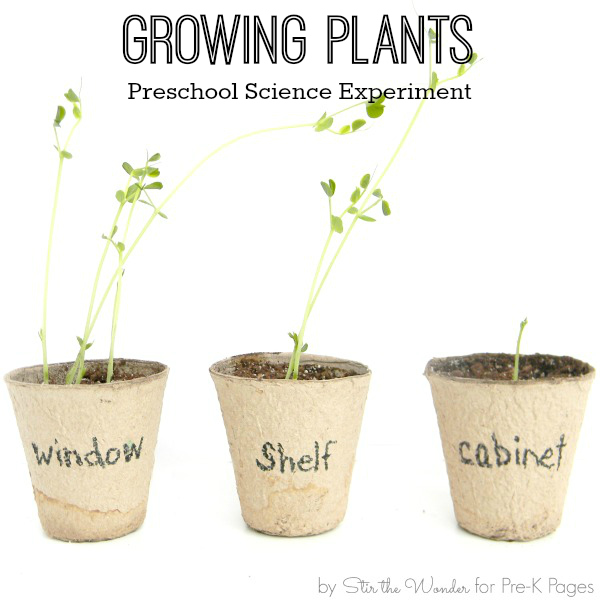 science for kids growing plants experiment pre k pages. Black Bedroom Furniture Sets. Home Design Ideas