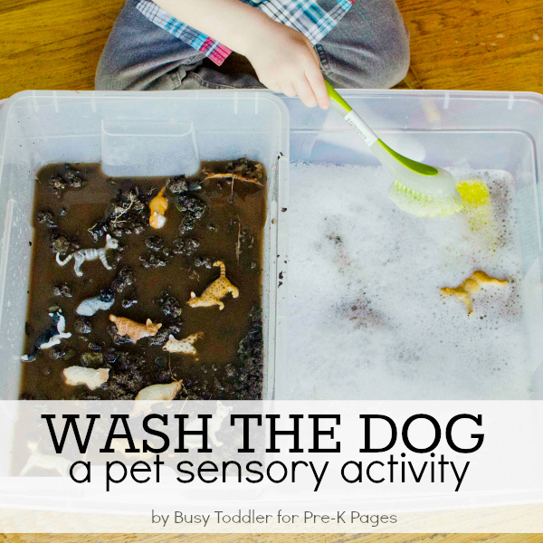 sensory play wash pets