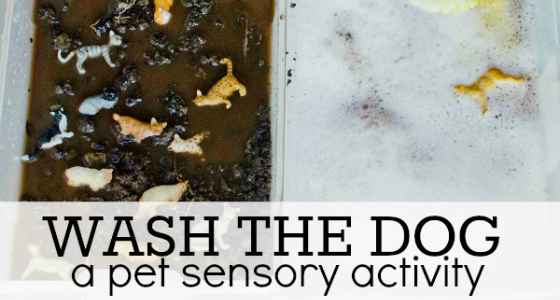 pet sensory activity wash dog