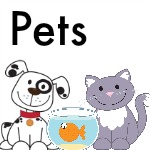 Pets Theme for Preschool