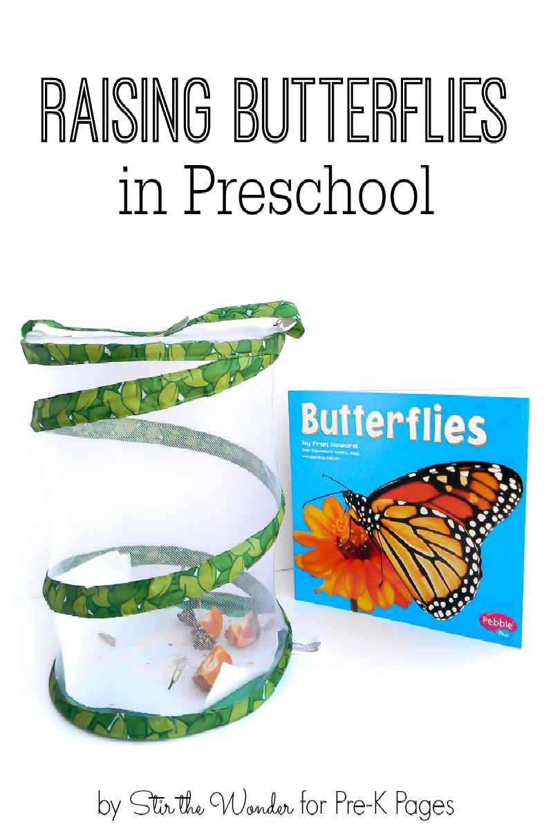 Raising Butterflies in Preschool