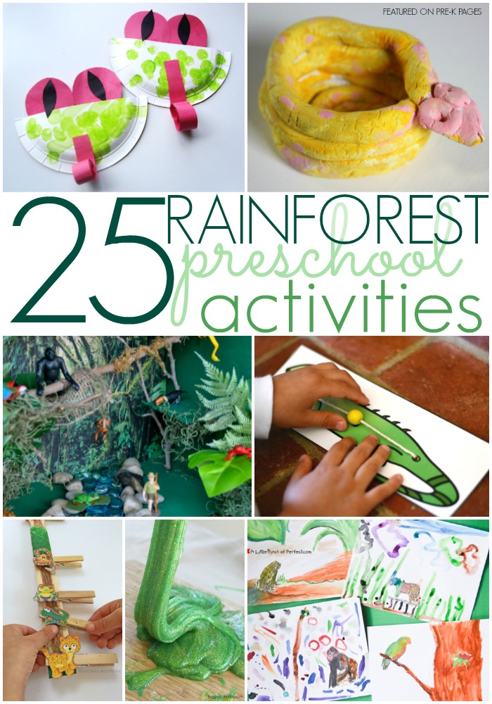 forest animals preschool theme rainforest activities for preschoolers pre k pages 891