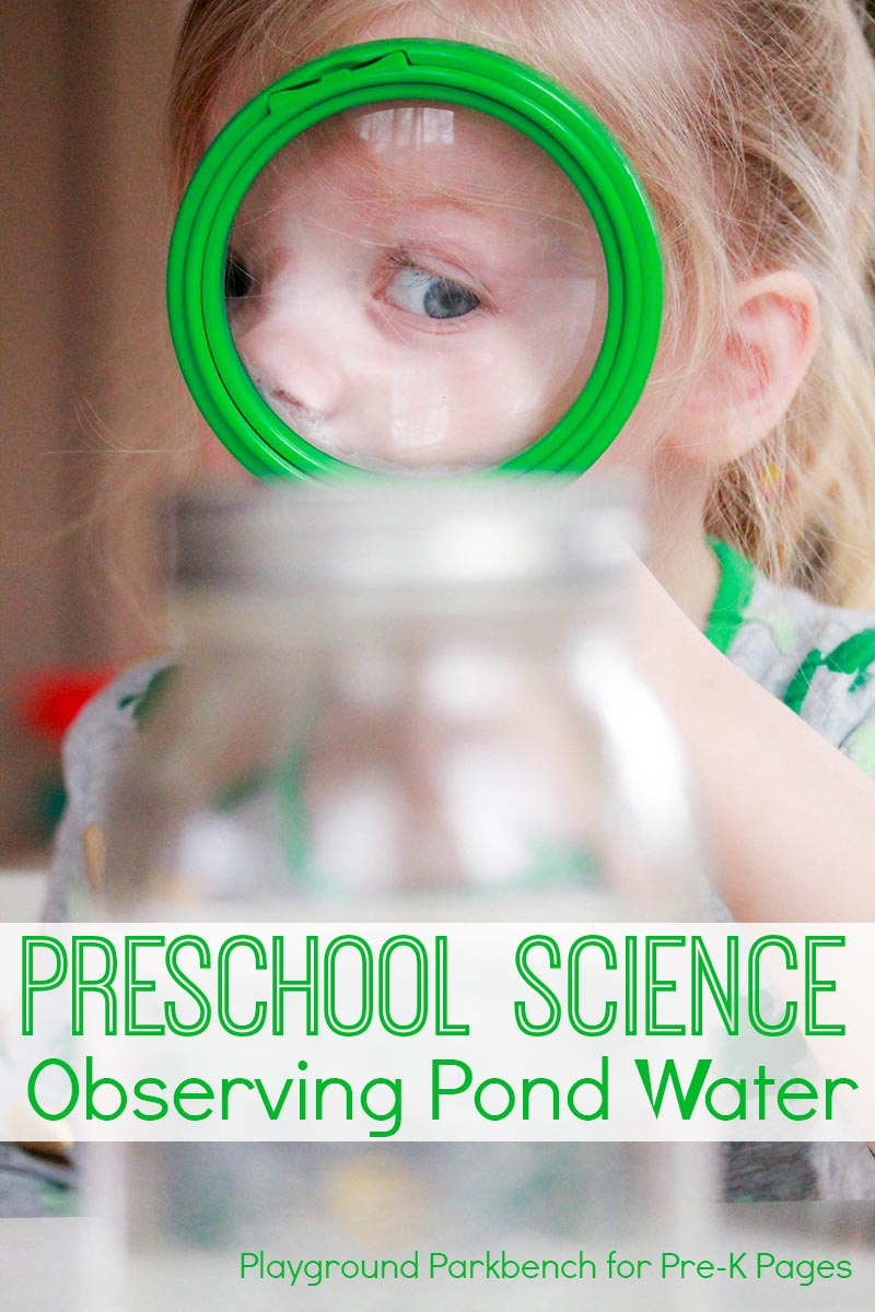 scientific observations pond preschool