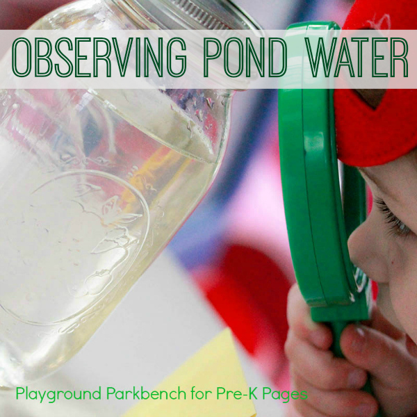 observing pond water preschool