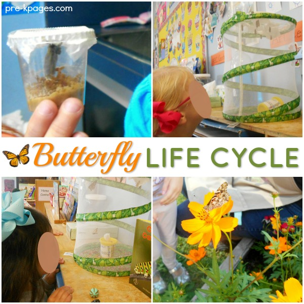 Butterfly Life Cycle Science in Preschool