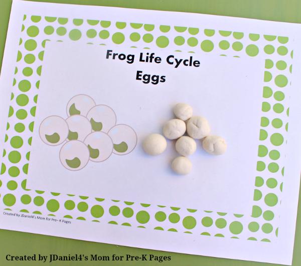 frog life cycle eggs pond