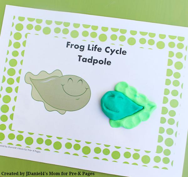 frog life cycle tadpole play dough