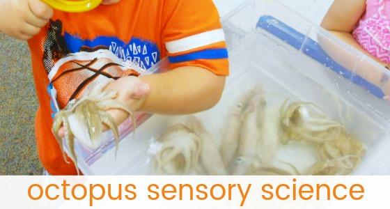 Octopus Sensory Bin for Preschool