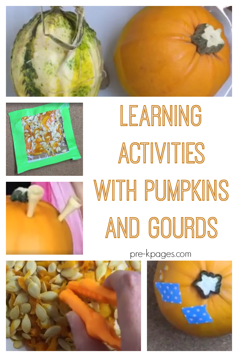 pumpkins and gourds for preschool