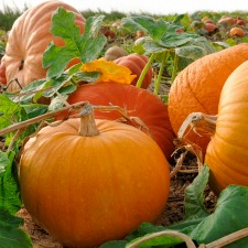 Pumpkin theme activities for preschool