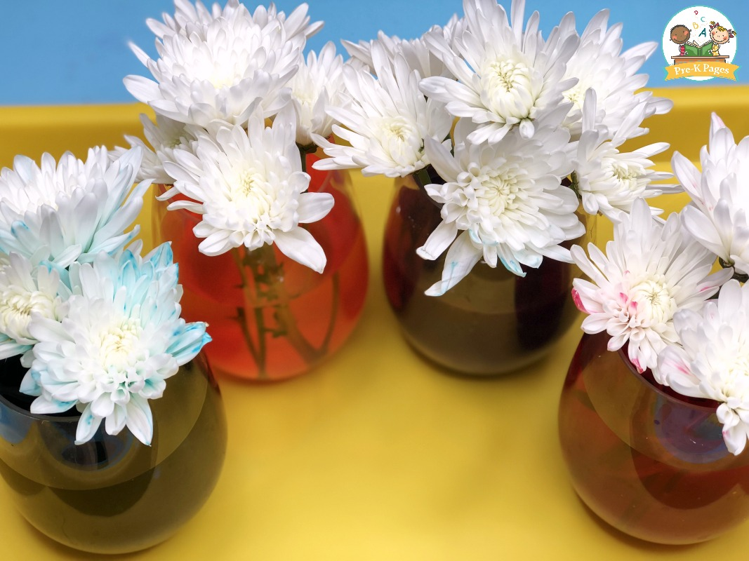 Color Changing Flowers Science Experiment 3