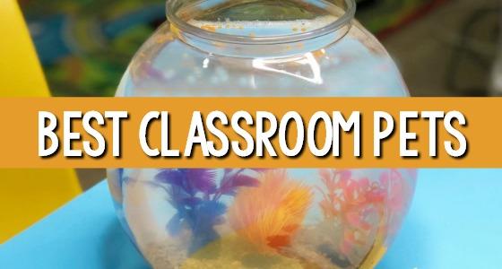 Best Classroom Pets for Preschool