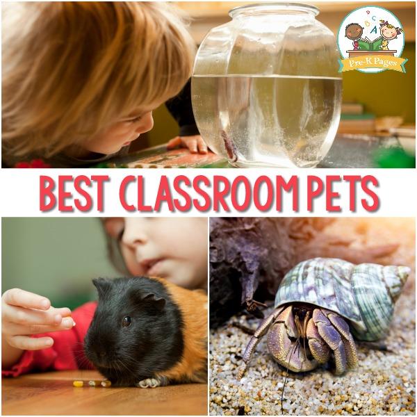 Classroom Pet Ideas ~ Best classroom pets for preschool pre k pages