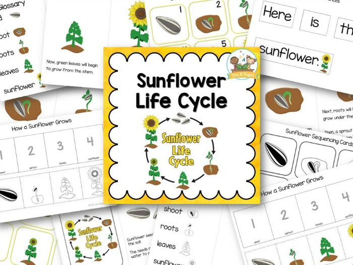 Pumpkin Patterns Worksheet furthermore A Aeb C Ac Df Fa De F additionally Sunflower Life Cycle Preview moreover Preview Landscape moreover Dae B A Bc F E F A Aaf E Science Resources Science Ideas. on kindergarten sequencing cut and paste