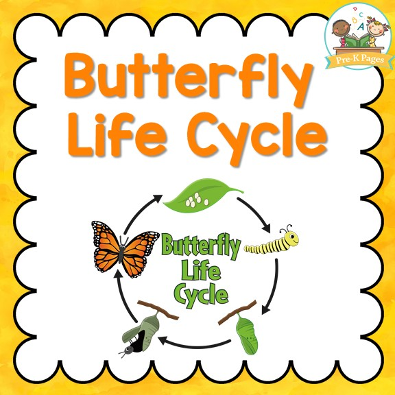 butterfly life cycle for preschool butterfly cycle pre k pages 723