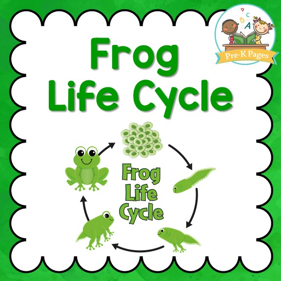 Frog Life Cycle - Pre-K Pages