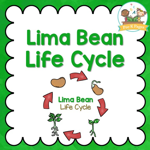 Lima Bean Life Cycle Preview on Pre Plant Life Cycle